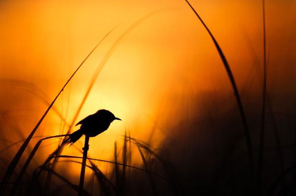 ساعت طلایی عکاسی